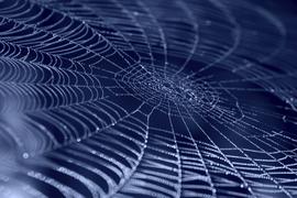 Spinnennetz mit Wassertropfen